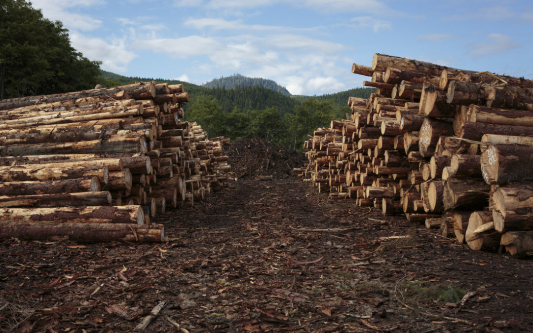 Wszystkie kategorie dla Drewna Kontrolowanego zatwierdzone dla Polski