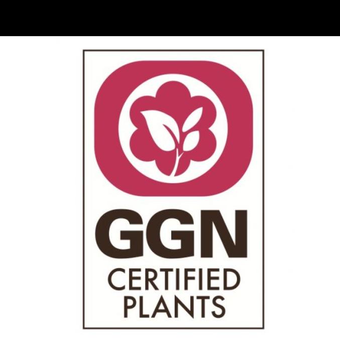 LIDL stawia nowe wymagania dla producentów kwiatów i roślin ozdobnych