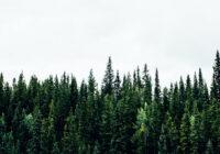 pozyskiwanie drewna kontrolowanego