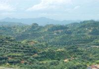 Pod koniec 2018 roku organizacja Roundtable on Sustainable Palm Oil opublikowała raport dotyczący rozwoju systemu certyfikacji zrównoważonej produkcji oleju palmowego.