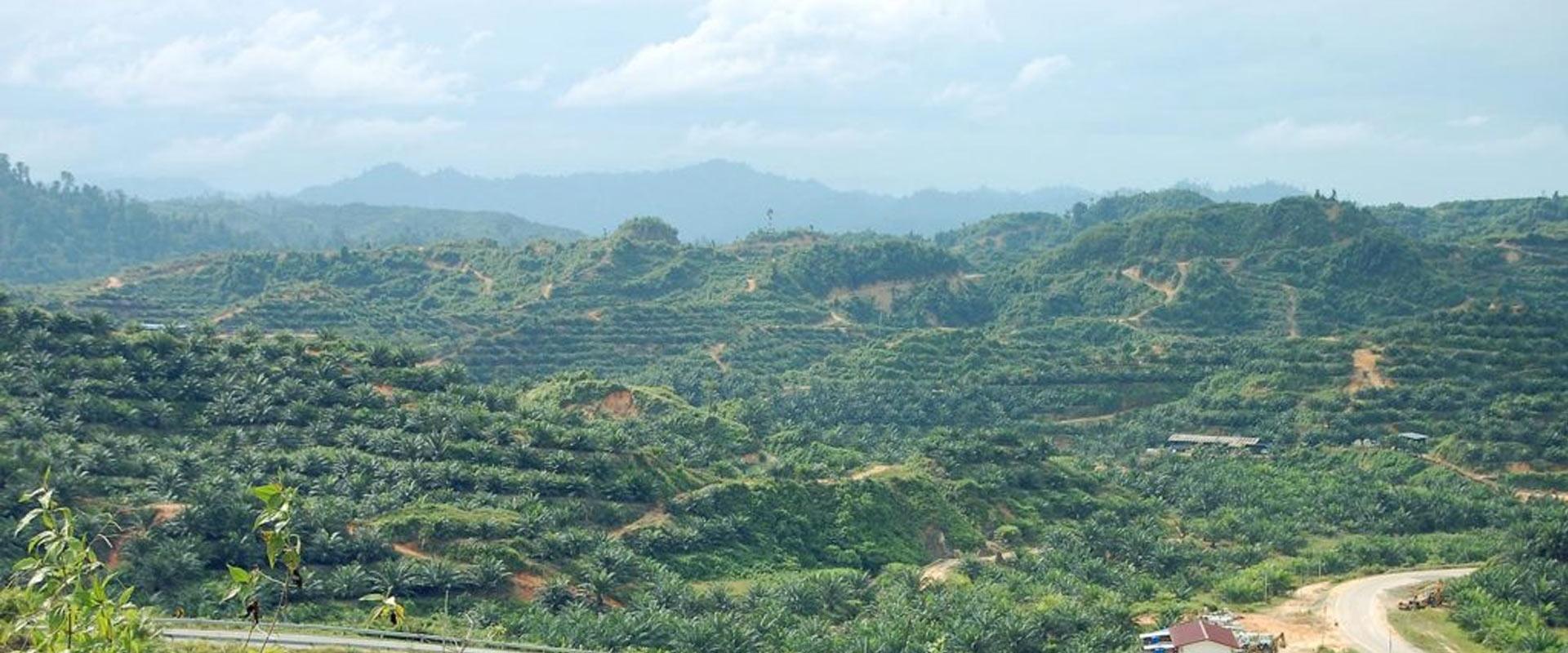 """Etykieta """"Palm Oil Free"""" oszukuje konsumentów."""