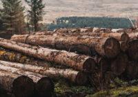 ryzyka drewna kontrolowanego