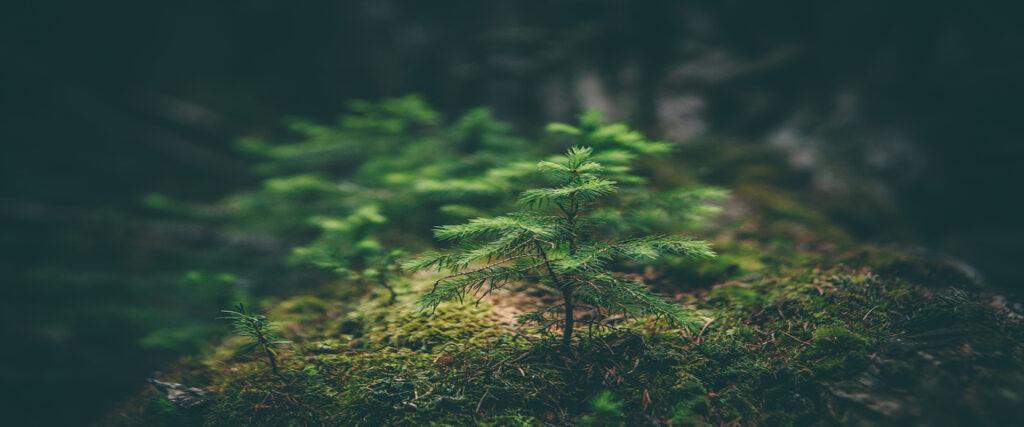Zabezpieczone: Szkolenie: Certyfikacja biomasy leśnej, wymogi dyrektywy RED II.