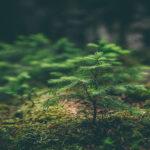 certyfikacja biomasy leśnej