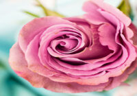 wymagania dla producentów kwiatów i roślin ozdobnych