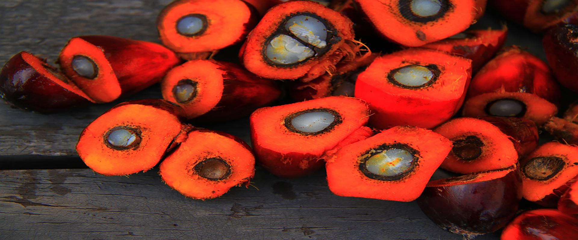 Certyfikacja oleju palmowego, jako najrozsądniejsze rozwiązanie problemów środowiskowych i gospodarczych, związanych z zapotrzebowaniem na rośliny oleiste.