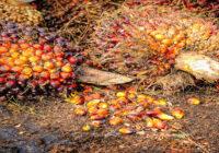 raport z badania poziomu certyfikowanego oleju palmowego w Polsce 2021