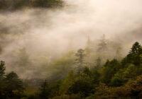 biomasa drzewna szkolenie