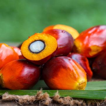 """Ten """"zły"""" olej palmowy"""