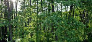 certyfikacja_lasów